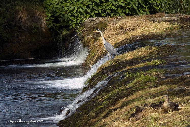 Kings river, kells, Co Kilkenny