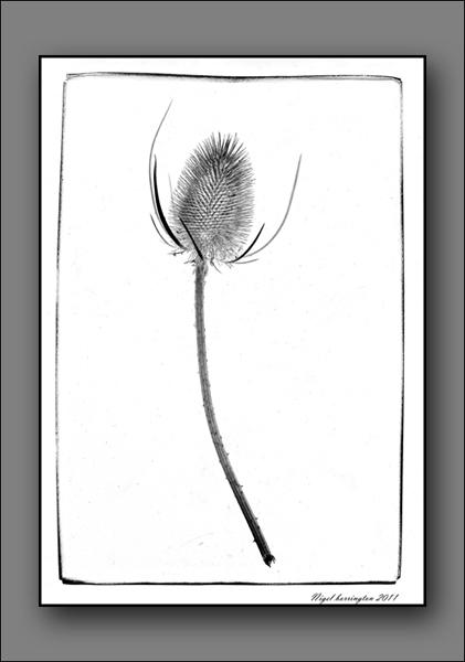 Photographic Art - Scanner art