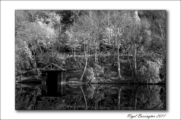 castlecomer Discovery park, woodland walks