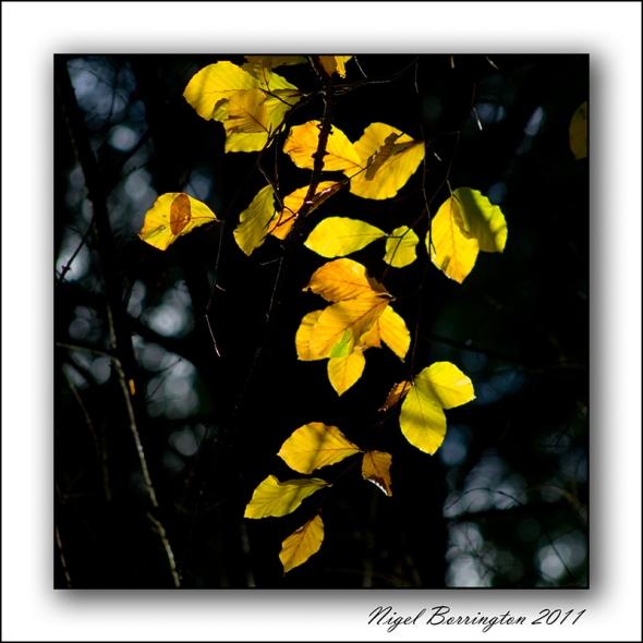 Glen Patrick Clonmel, Autumn 2011, Nigel Borrington