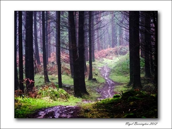 National Tree week Kilkenny
