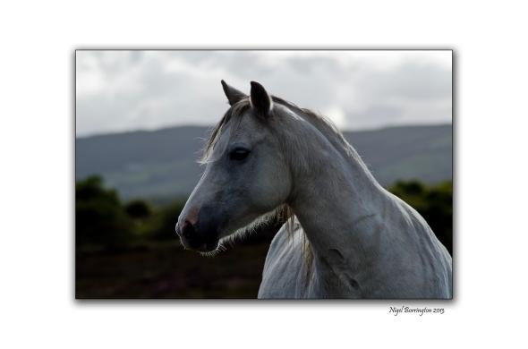 Bog Pony 10