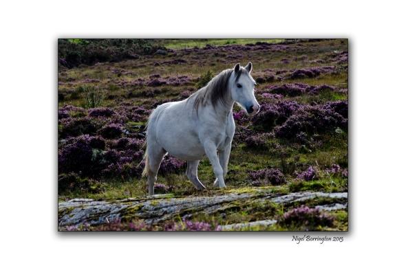 Bog Pony 20