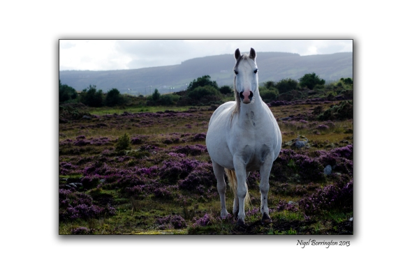 Bog Pony 40