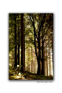 Irish wood lands