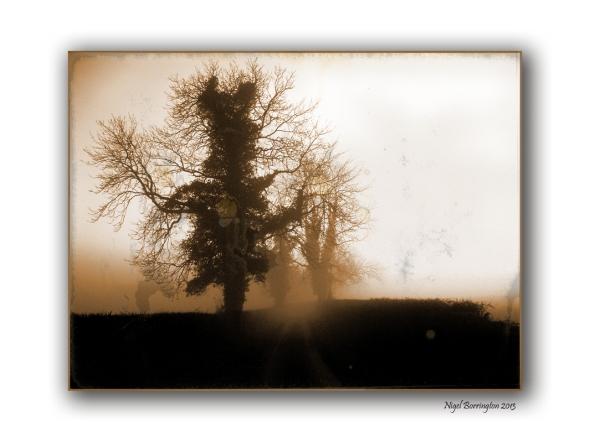 Misty Monday Mornings