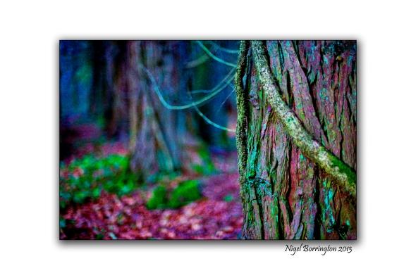 Pagan tree beliefs trees