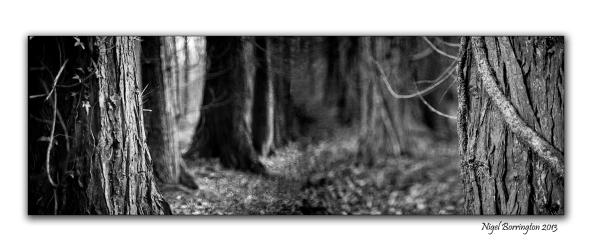 Pagan tree beliefs