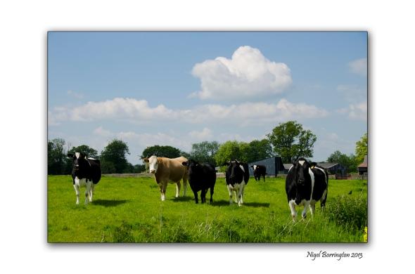 Kilkenny Landscape photography 2