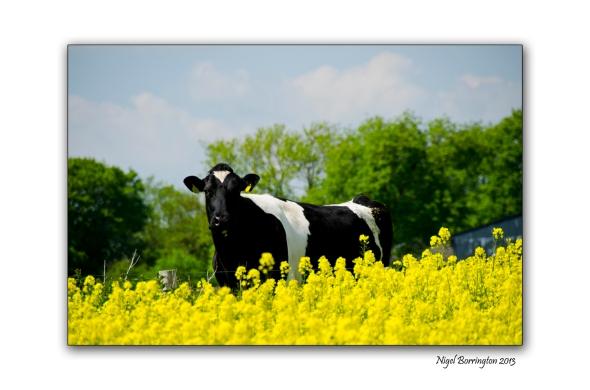 Kilkenny Landscape photography 3