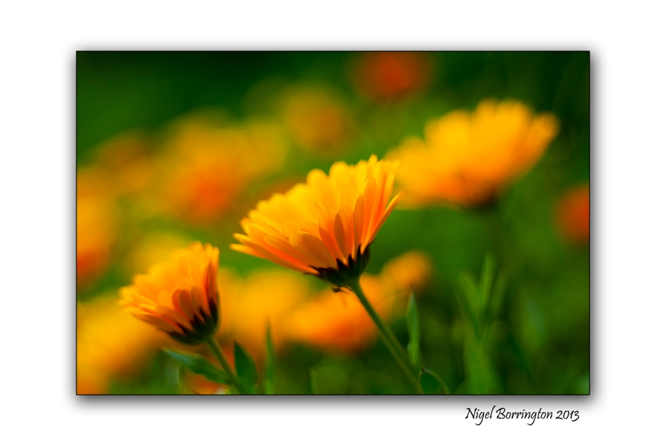 Kilkenny photography flowers at the river nore banks