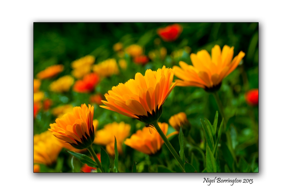Kilkenny photography flowers at the river nore