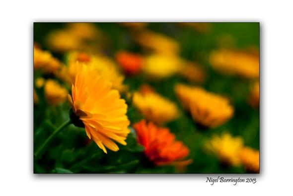 Kilkenny photography flowers