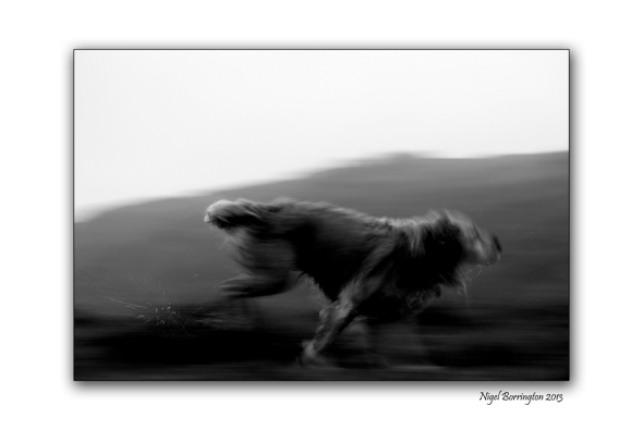 Molly in Motion 1