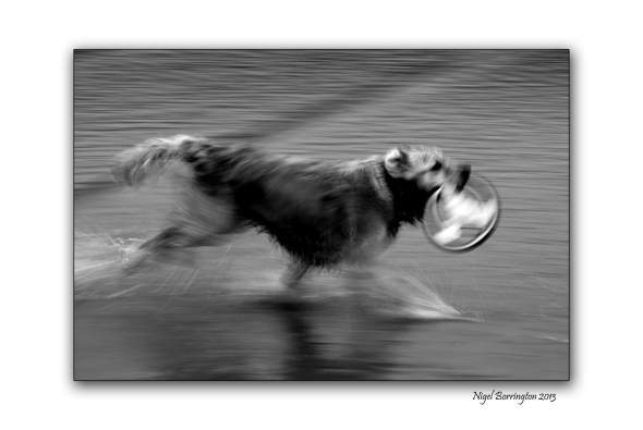 Molly in Motion 3