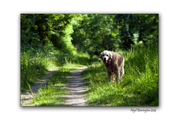 A morning walk for molly 1