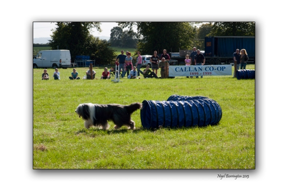 Images from a Dog show 2