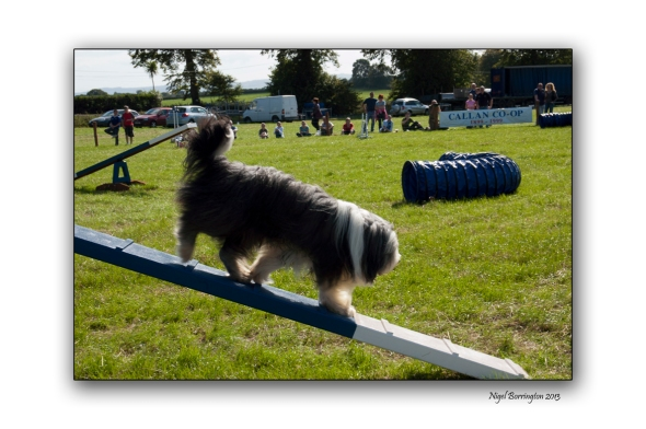 Images from a Dog show 3