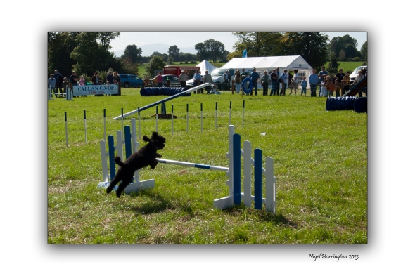 Images from a Dog show 4