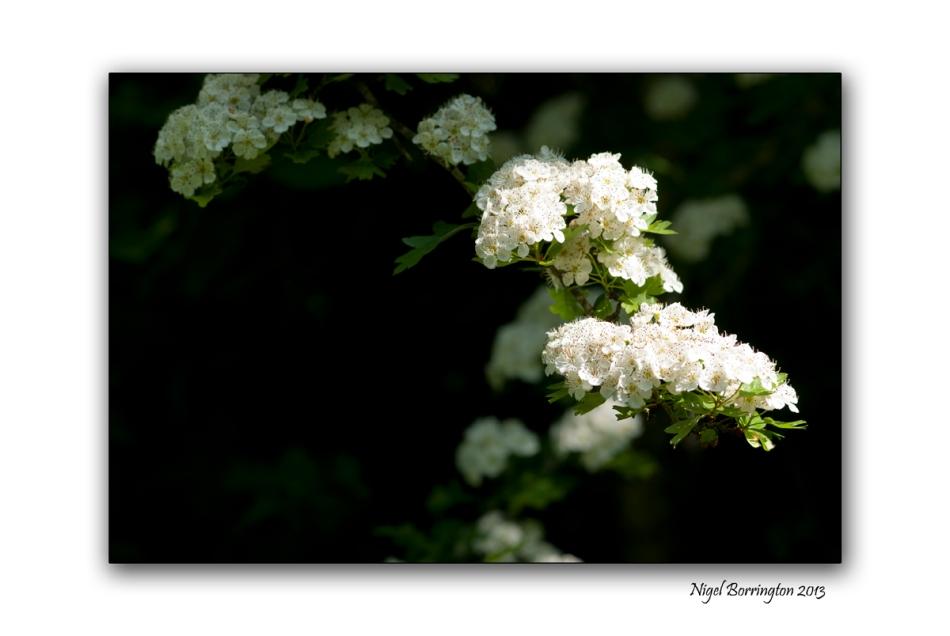 Irish nature photography 2