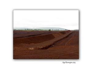 Littleton bog 11