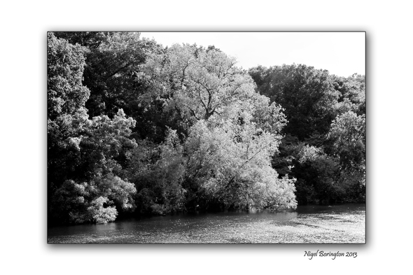 Trees along the river bank