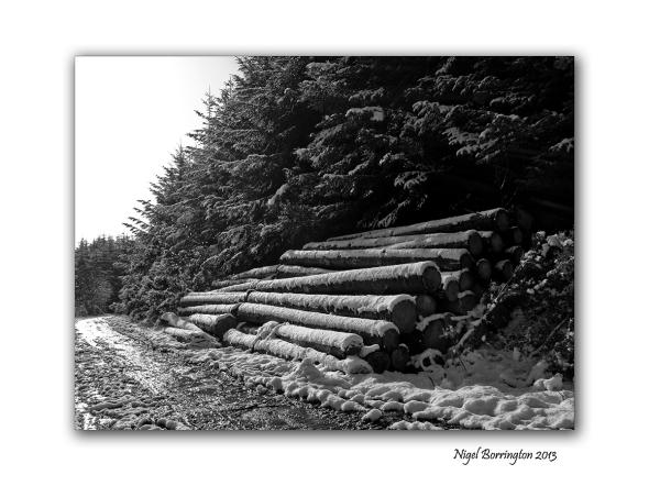Canon G1x landscape 7