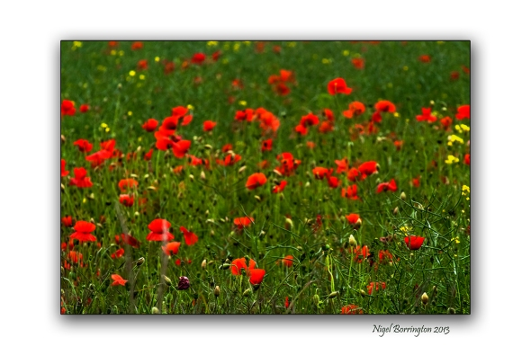 duckets grove poppy fields wide