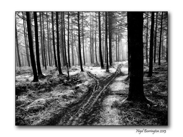 In wild woodlands 2