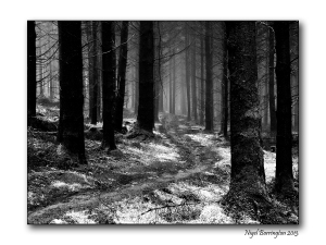 In wild woodlands 3