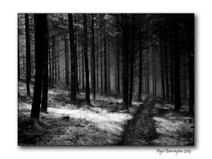 In wild woodlands 4