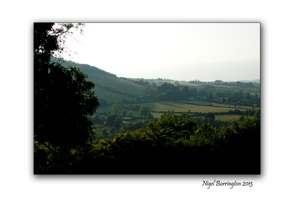 Kilkenny through the tress 1