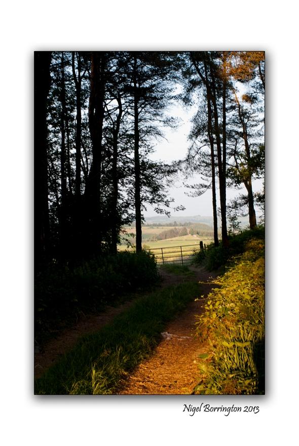 Kilkenny through the tress 4