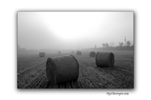 Round Bales black and white 2