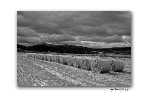 Round Bales black and white 3