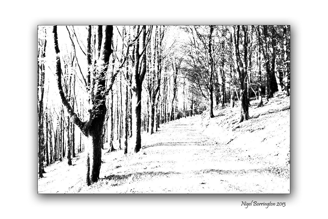 Woodland to Lino cuts image 1