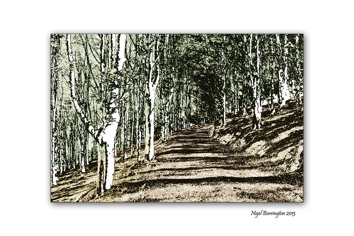 Woodland to Lino cuts image 6