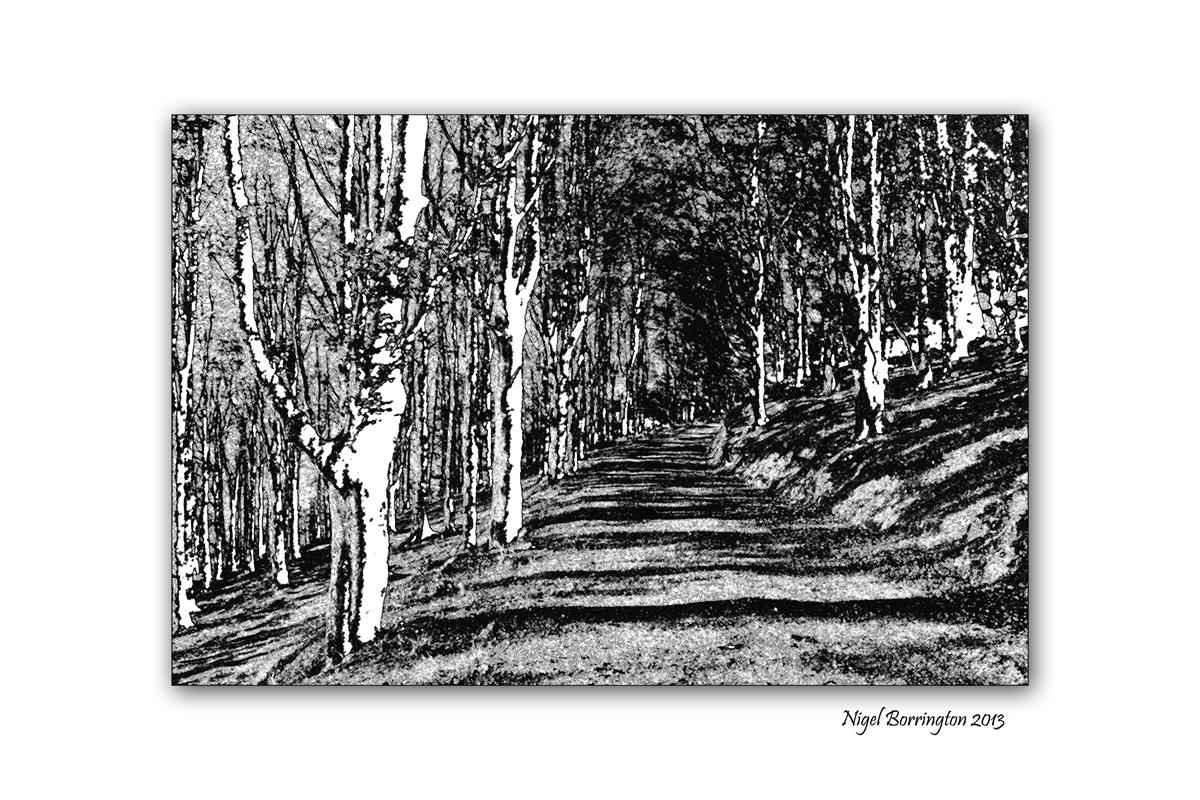 Woodland to Lino cuts image 8