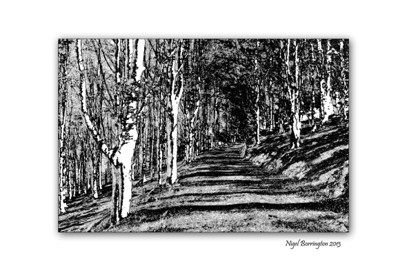 Woodland to Lino cuts image 8