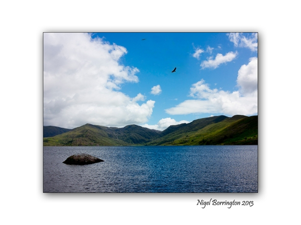 Kerry sea eagles