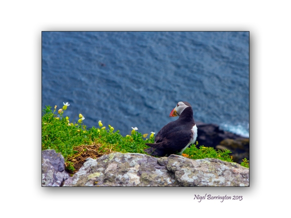 Puffins on Skellig Michael 2