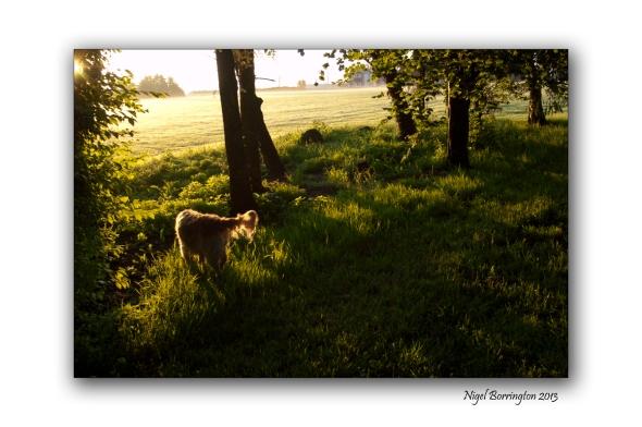 Sunrise Fair Green Callan 4