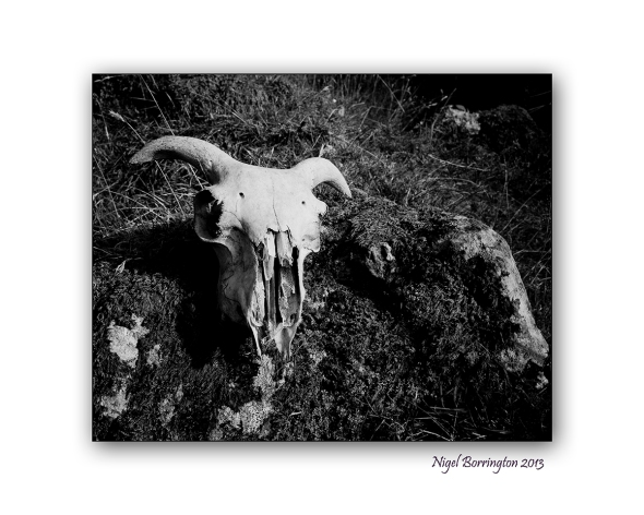 the sheeps skull 1