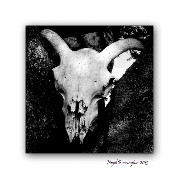 the sheeps skull 2