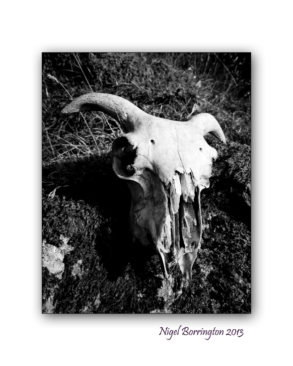the sheeps skull 3