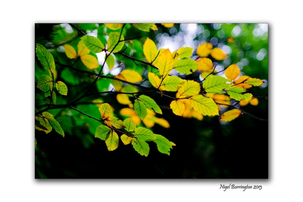 In A September woodland 1