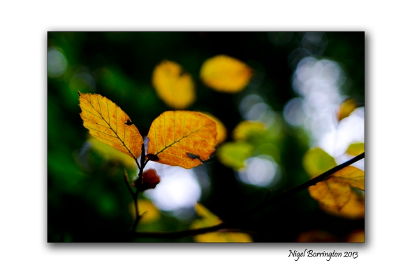In A September woodland 2