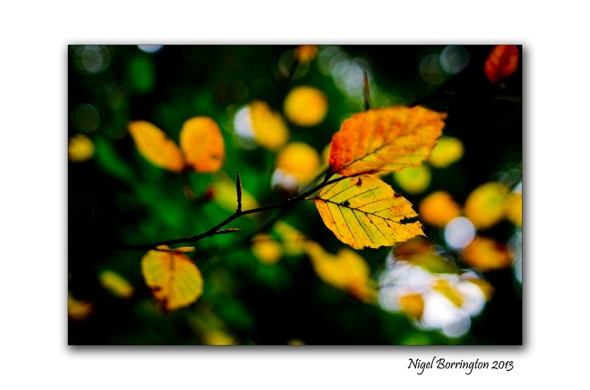 In A September woodland 3