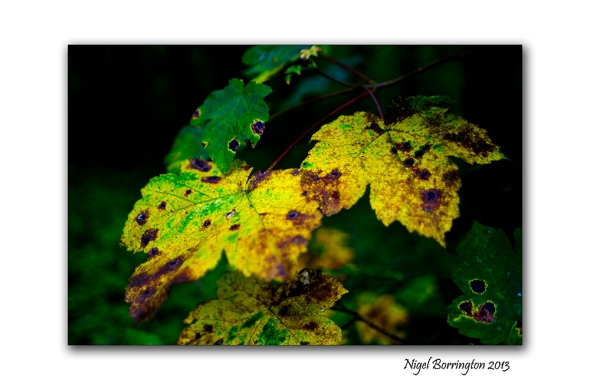 In A September woodland 5
