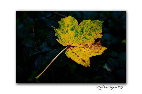 In A September woodland 7